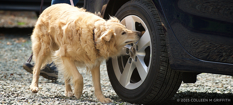 Vehicle Search - Canine Scent Detection | Phoenix, MD